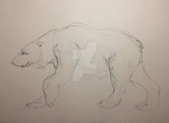 polar bear sketch