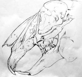 Rabbit Skull Study by lamelobo