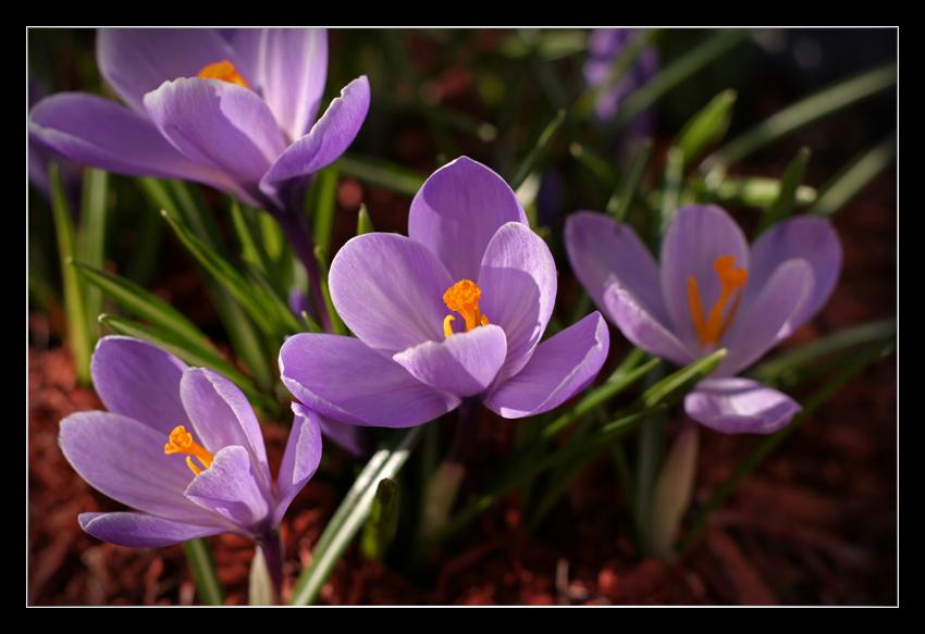 Flowers by BeDd