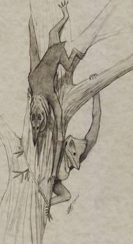 Arbordominus peregrinum 00
