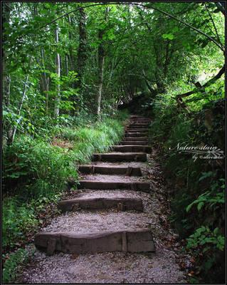 .:Nature stair:. by aliveruka