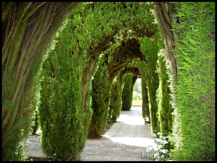 Arabic garden