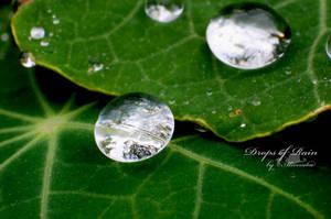 .:Drops of rain:. by aliveruka