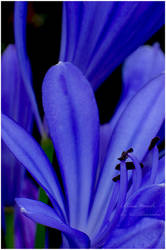 .:Blue touch:. by aliveruka