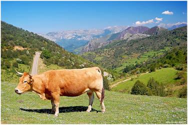 .:Asturian landscape:. by aliveruka