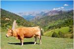 .:Asturian landscape:.
