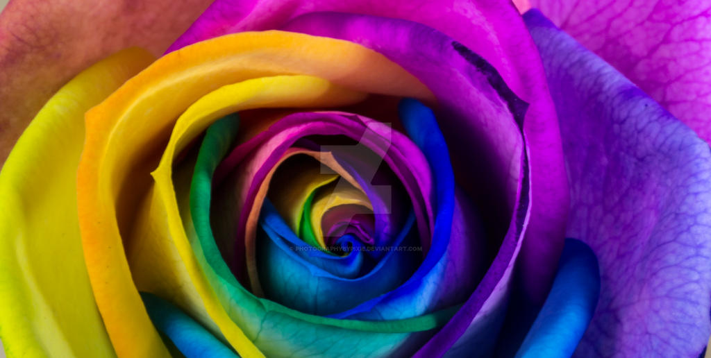 Rainbow rose by photographybypixie on deviantart for Where can i buy rainbow roses