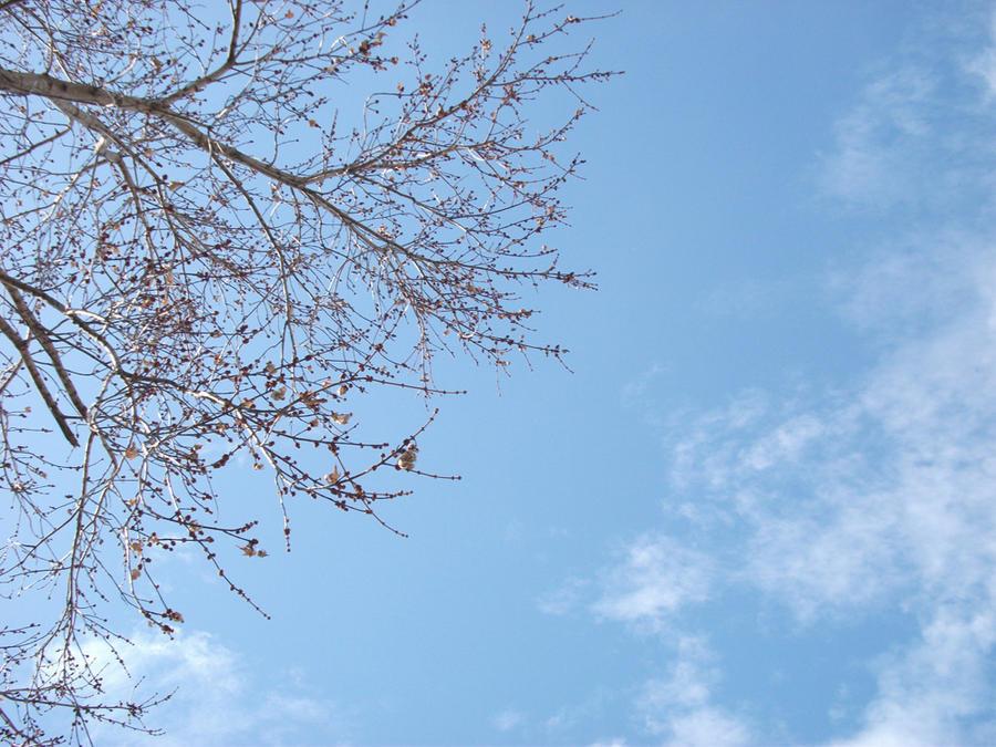 Beautiful sky by googly-googly2