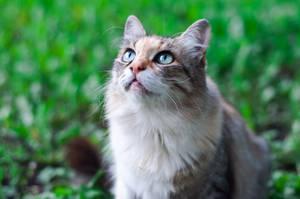 Cat looks by Anna-Belash