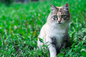 Day 3. Sad cat by Anna-Belash