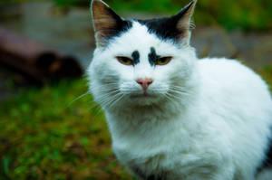 Altar-cat by Anna-Belash