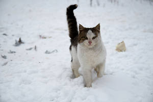 Brave cat by Anna-Belash