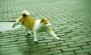 Cat walks