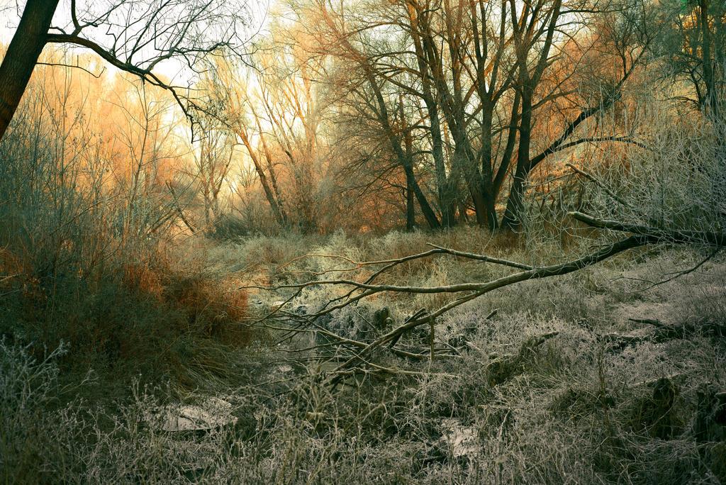 Orange twilight by Anna-Belash