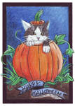 Hepi Halloween Kitty