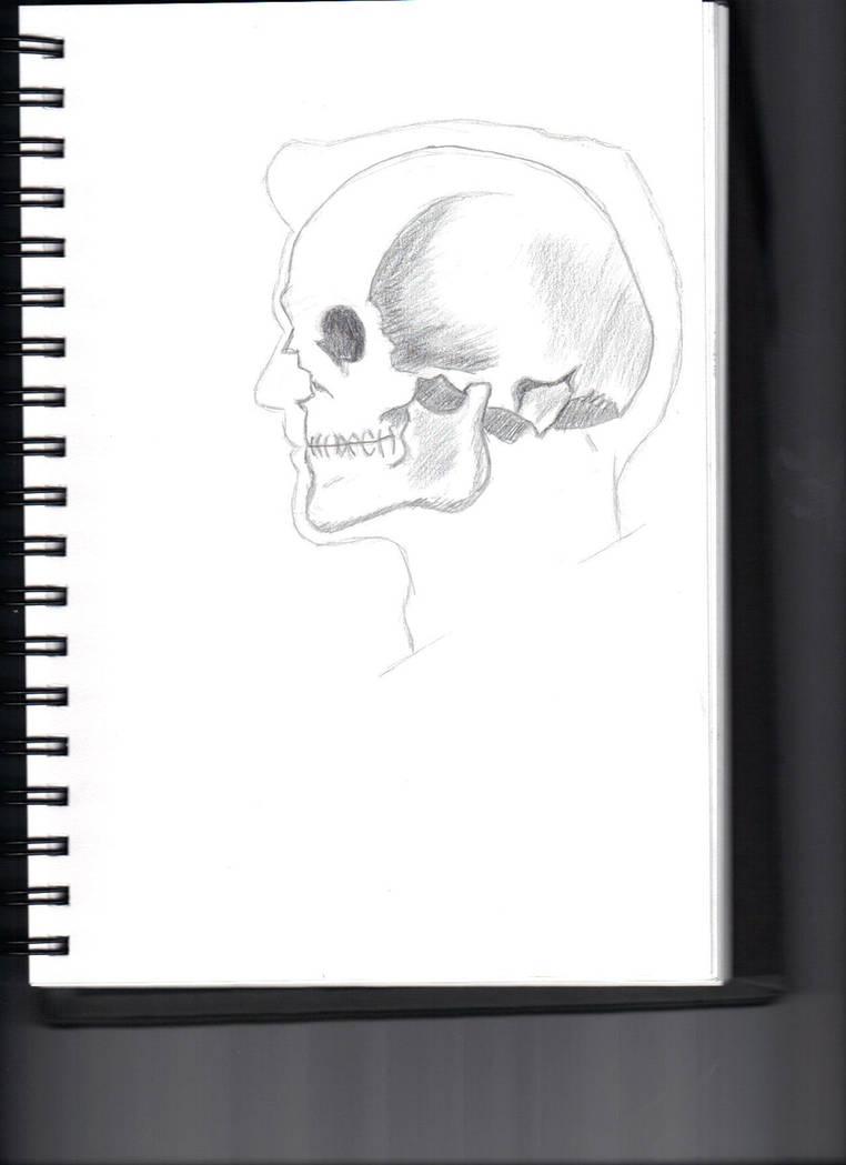 Skull In Male Profile Outline