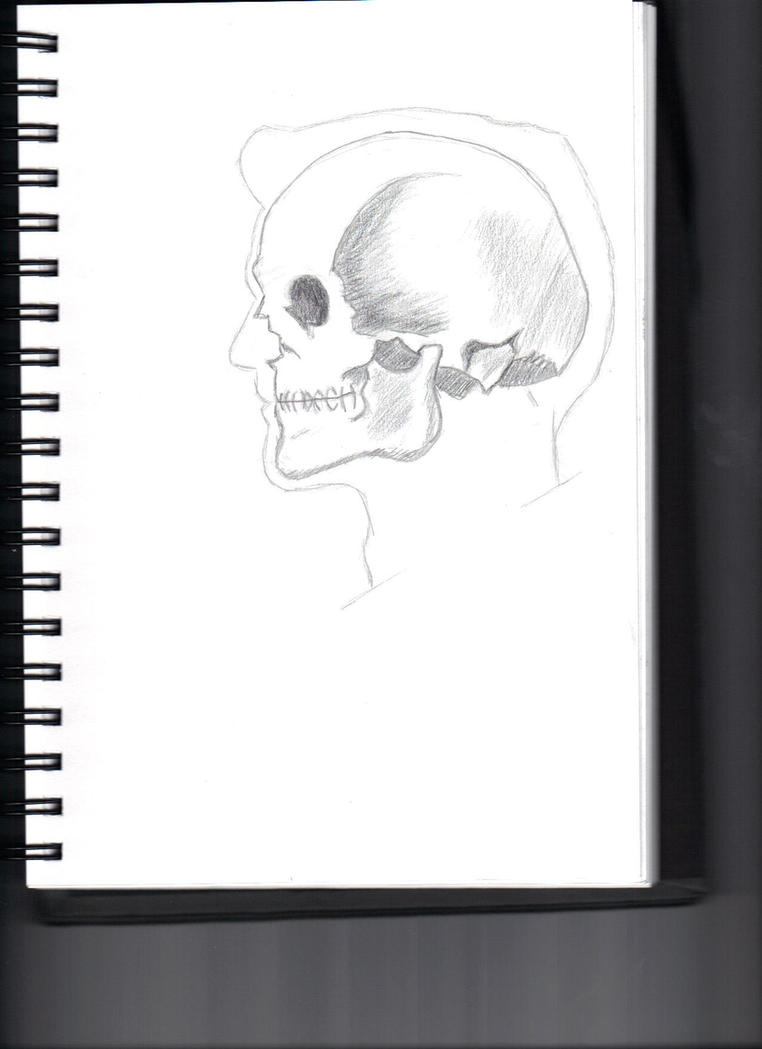 Skull In Male Profile Outline by Johnson-bunnells