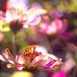 Dance of colors by Photoloaded