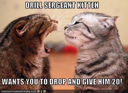 drill_sergeant_kitteh_by_demonspawn12-d3