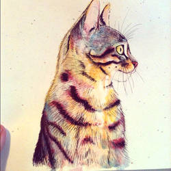 Kitty Cat in gouache and ink