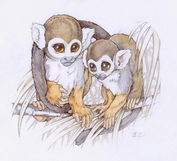 squirrel monkeys by Pallat