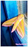 Fancy Moth