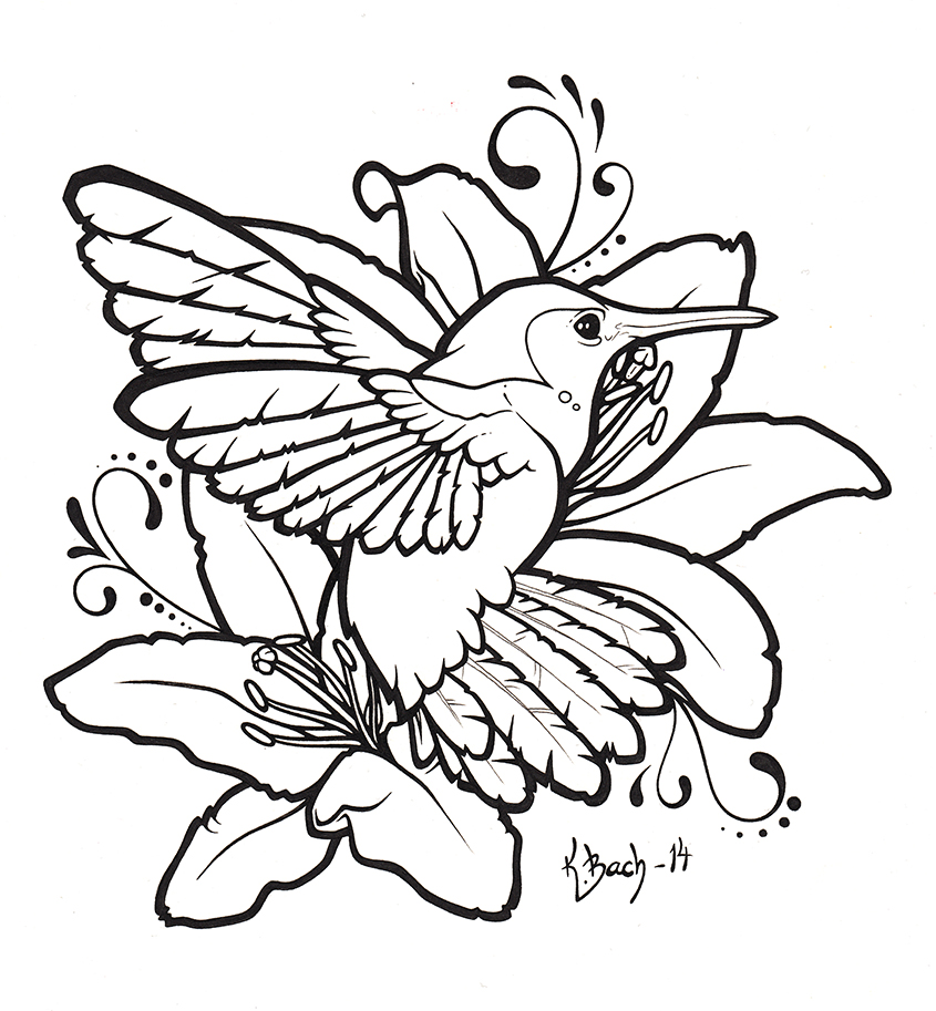 pin hummingbird line art pictures on pinterest