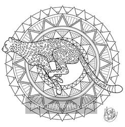 Cheetah (The Exotic Colouring Book)