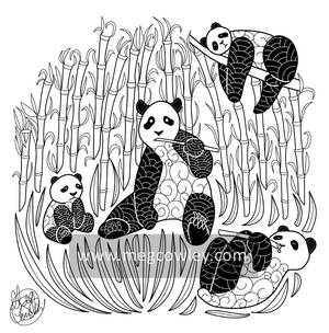 Giant panda (The Exotic Colouring Book)