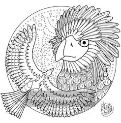 Philippine Eagle (The Exotic Colouring Book)