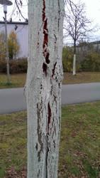 Flesh tree by skotan