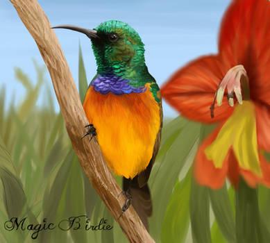 Sunbird by MagicBirdie