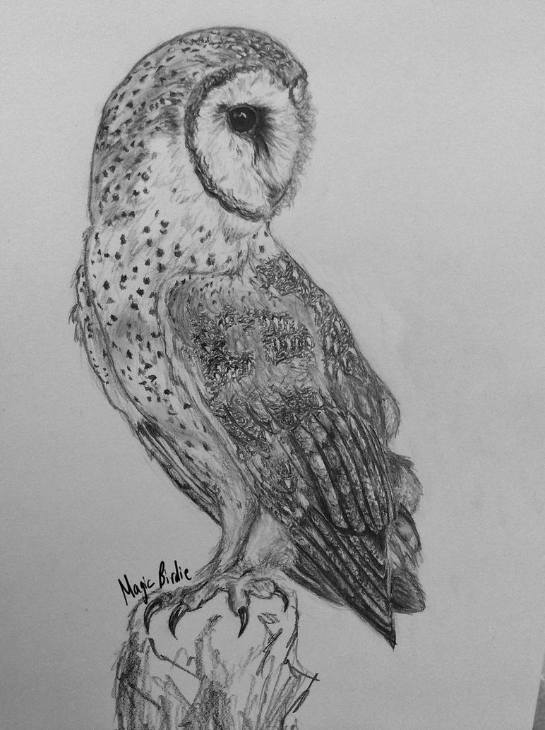 Barn Owl by MagicBirdie