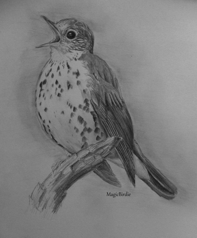 Wood Thrush by MagicBirdie