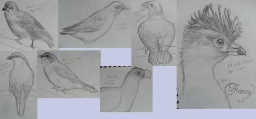 Sketch a Day Week 5 (29-35) by MagicBirdie