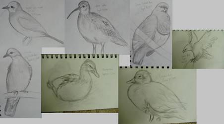 Sketch a Day Week 6 (36-42) by MagicBirdie