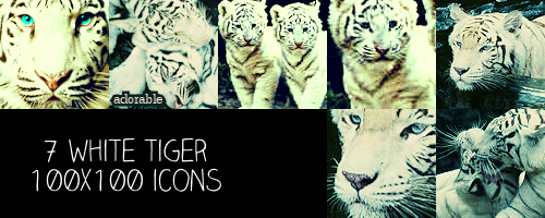 White Tiger 100x100 icons by crazycordy