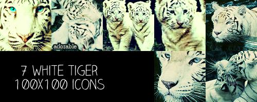White Tiger 100x100 icons by crazycordy
