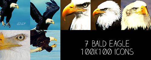 Bald Eagle 100x100 icons by crazycordy