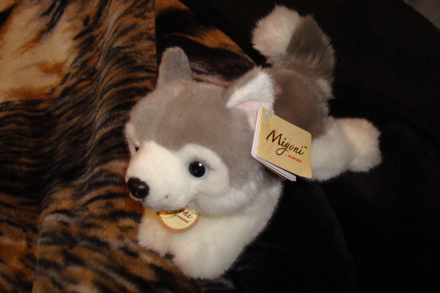 Miyoni Aurora plush Husky small by Vesperwolfy87