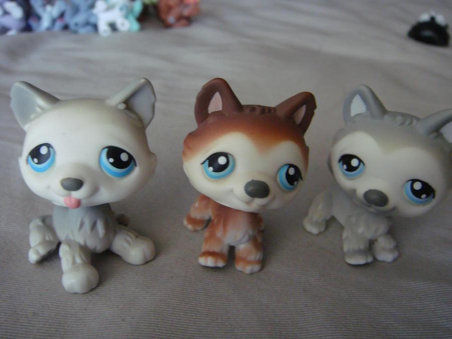 littlest pet shop husky - photo #17