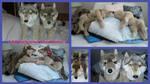 FAO Schwarz Wolves 18in!!