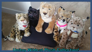 Unitoy Wildcat Plush Collection!!