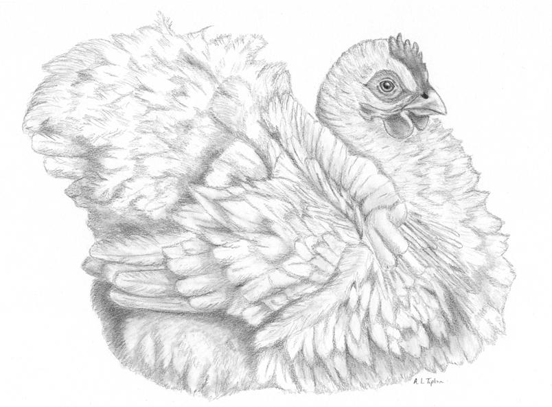 Chicken Portrait by wolfysilver
