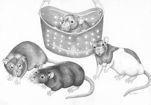 Rat Portrait by wolfysilver