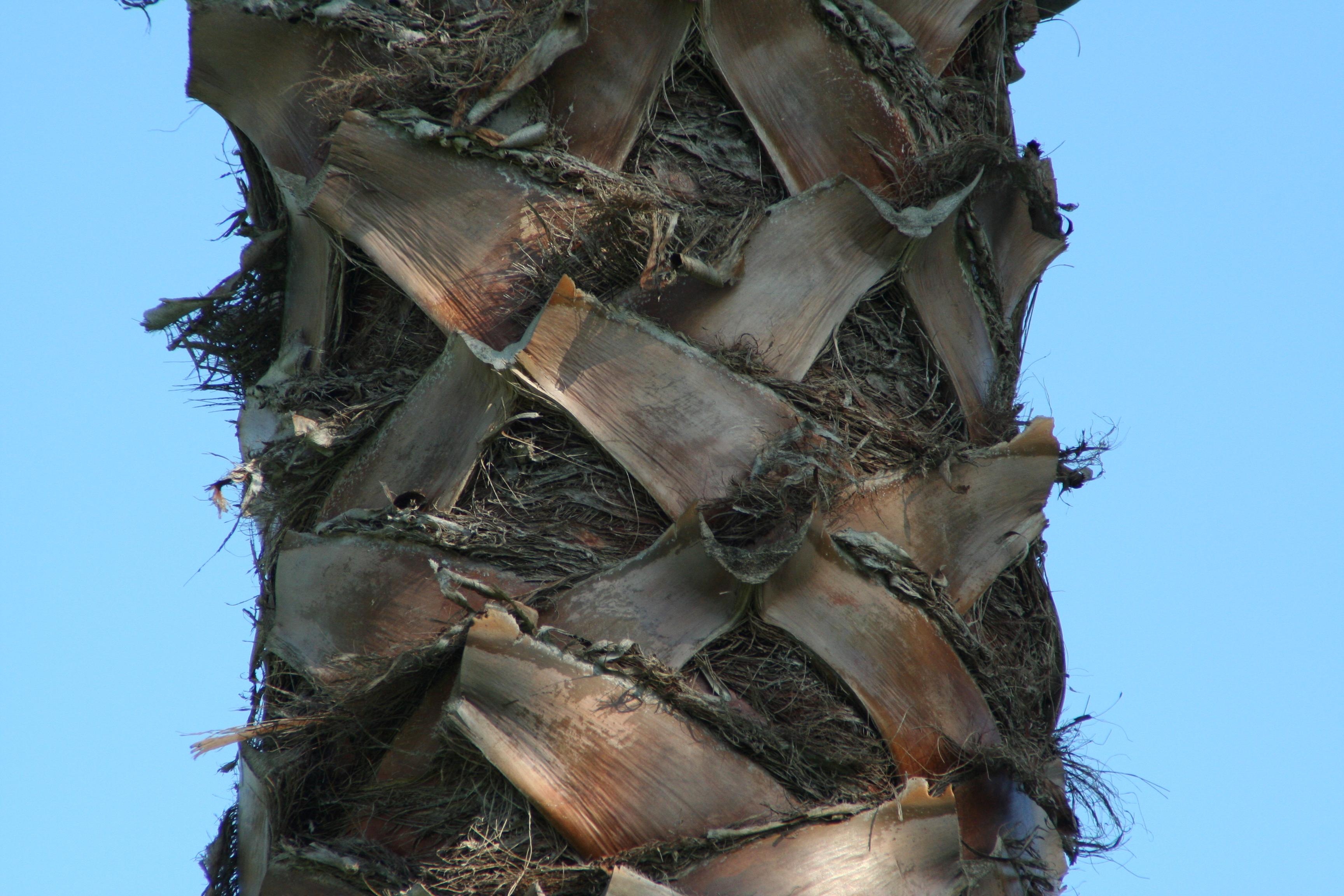 Palm Tree Trunk By W4tts On Deviantart