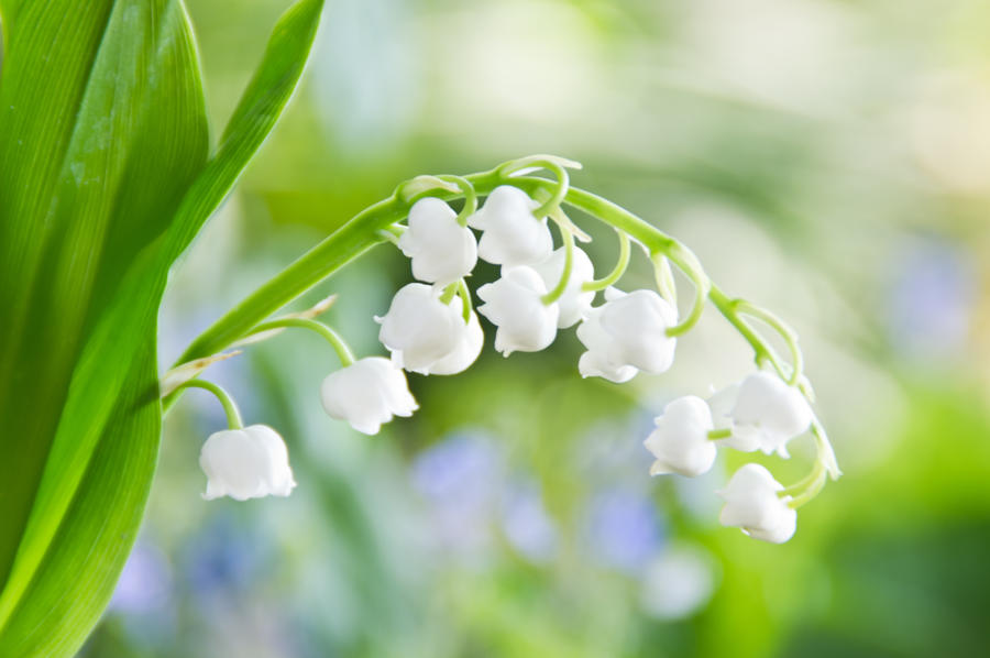 White bells by Sweet-Nature on DeviantArt