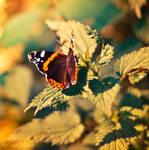 Quand te reverais-je ? by Sweet-Nature