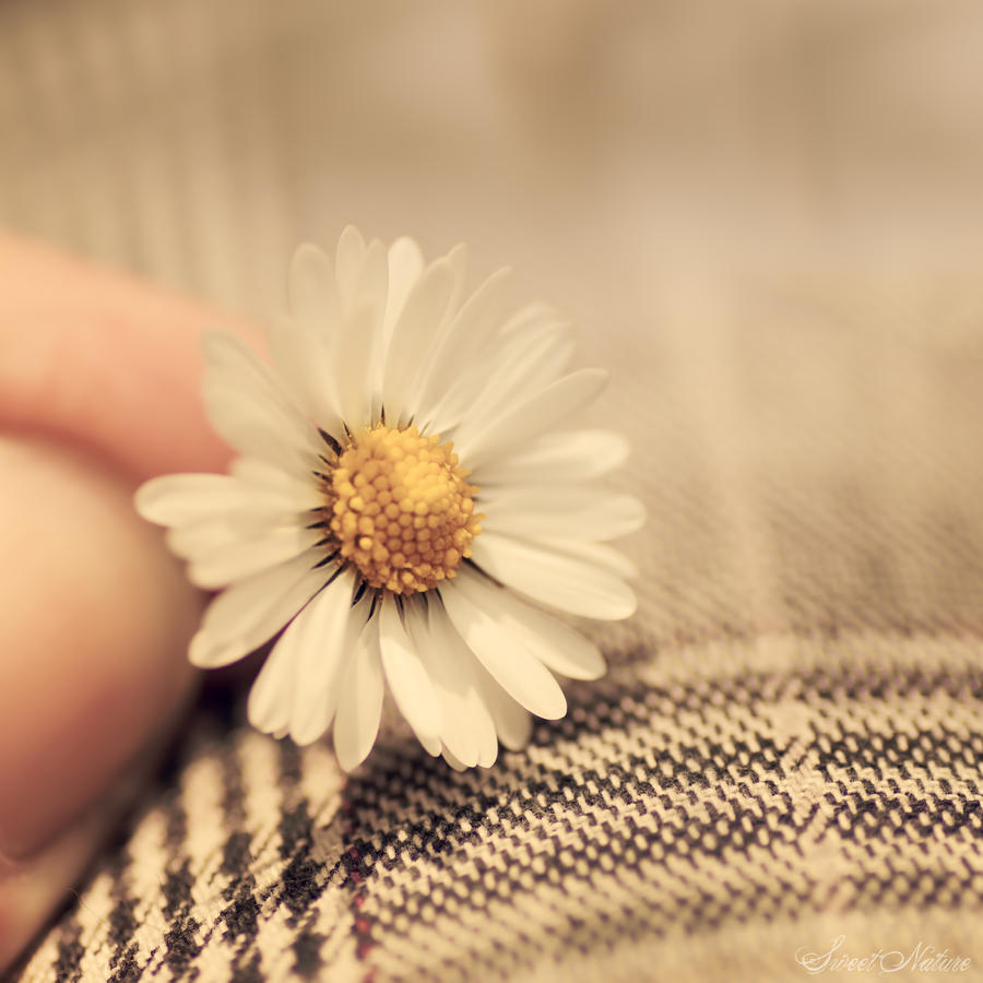 Pretty little things by Sweet-Nature on DeviantArt