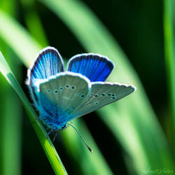 Bleu Irise by Sweet-Nature
